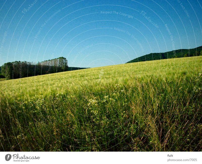 Acker Himmel Wald Feld Getreide