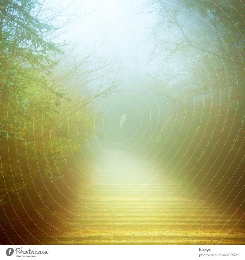 Alles nur ein Traum Natur Sonnenlicht Frühling Nebel Baum Park ästhetisch außergewöhnlich exotisch fantastisch positiv schön mehrfarbig ruhig träumen