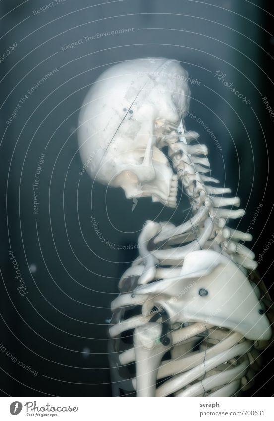 Skelett Mensch Leben Tod Kopf Gesundheitswesen Angst Körper stehen Ende Brust Halloween Leiche Entsetzen Anatomie Schädel