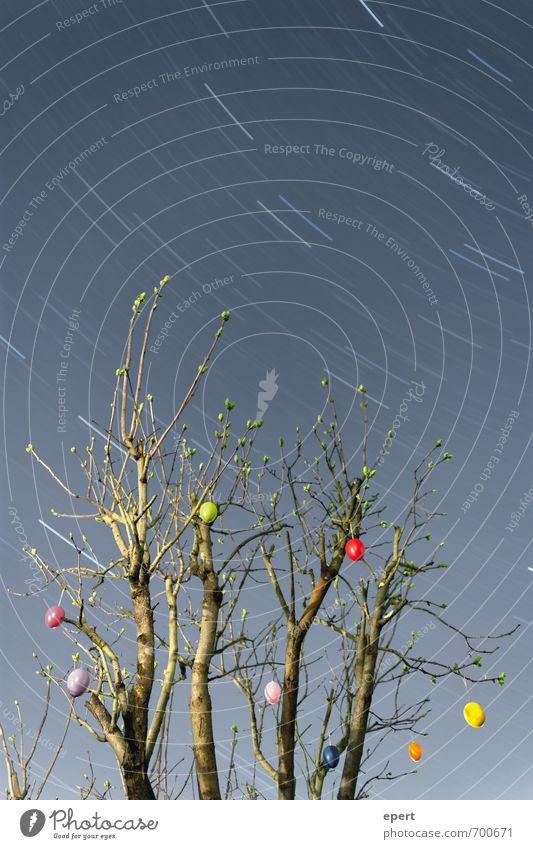 O Stern Nachthimmel Frühling Pflanze Sträucher Osterei Schmuck Dekoration & Verzierung Ostern frei Fröhlichkeit Unendlichkeit Beginn Bewegung Ewigkeit