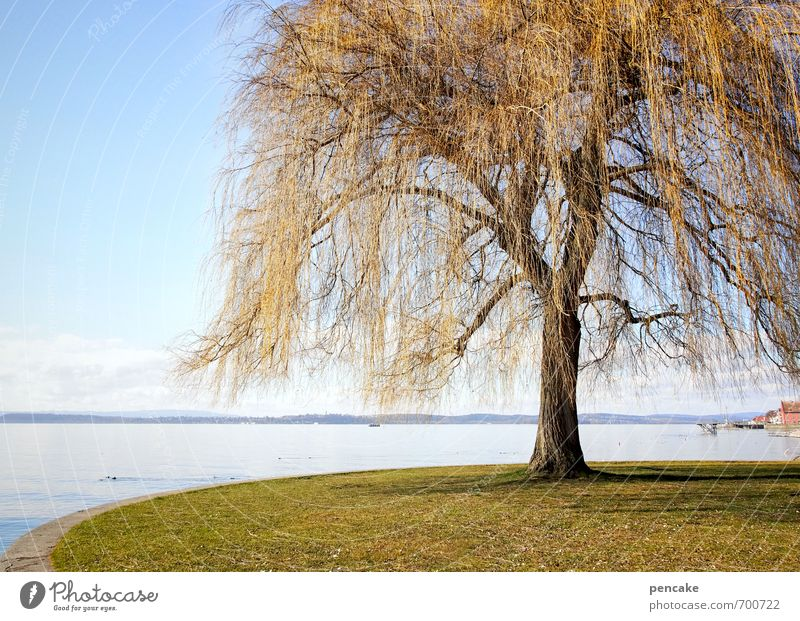 frühlingslametta Natur Landschaft Frühling Park Seeufer Bodensee Zeichen ästhetisch Trauerweide Lametta goldgelb Baum einzeln Farbfoto Außenaufnahme