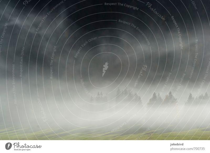 Tannenspitzen Nebel Nadelwald Wiese weiß Rauch Farbfoto Außenaufnahme Menschenleer Textfreiraum links Textfreiraum oben Textfreiraum unten Tag