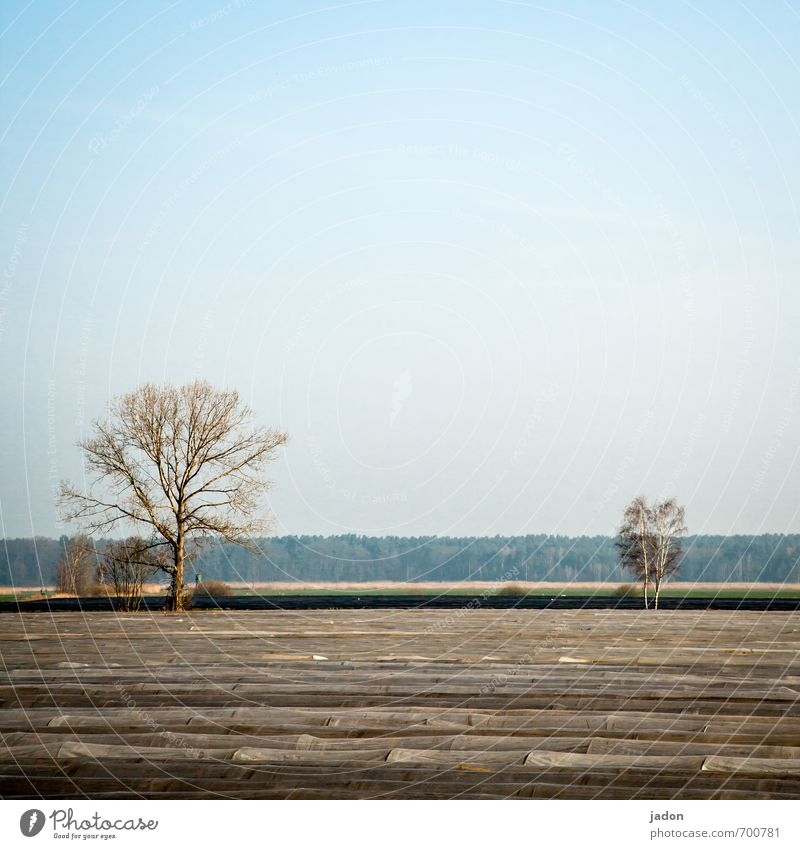 wachstumsbeschleuniger. Baum Landschaft Frühling Lebensmittel Feld Netzwerk Landwirtschaft Gemüse Forstwirtschaft innovativ Spargel Spargelfeld Folienbeet