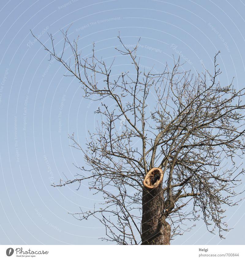 der Schrei des Baumes... Umwelt Natur Pflanze Wolkenloser Himmel Frühling Schönes Wetter Blume Baumstamm Zweig Baumstumpf Park stehen Wachstum außergewöhnlich