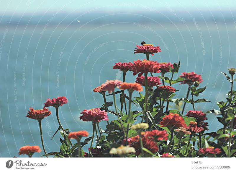 bluhende Sommerblumen am Seeufer Horizont Sommergefühl sommerlich Sommertag Ruhe Schatten blühende Blumen blau Idylle dunkelrot dunkelgrün ruhig orange Farbe