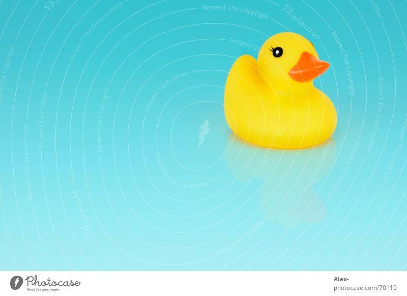 Entenarsch auf Grundeis Gummi gelb türkis klein blau hell Wasser Im Wasser treiben Schwimmen & Baden Badeente Vor hellem Hintergrund Freisteller