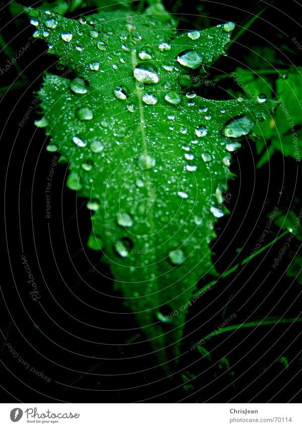 Drops Natur schön grün Wasser Erholung Blatt ruhig träumen Wassertropfen nass Wellness Urwald