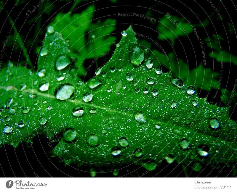 Titellos schön ruhig Natur Wasser Wassertropfen Blatt nass grün mehrfarbig Licht feucht hydrophob Blattgrün Photosynthese Tau Anschnitt Makroaufnahme