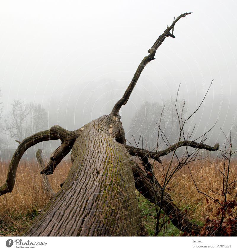 bizarr | Wild Life Natur Pflanze Baum Landschaft Ferne dunkel Umwelt Wiese Zeit außergewöhnlich Horizont liegen Angst Nebel bedrohlich Ast