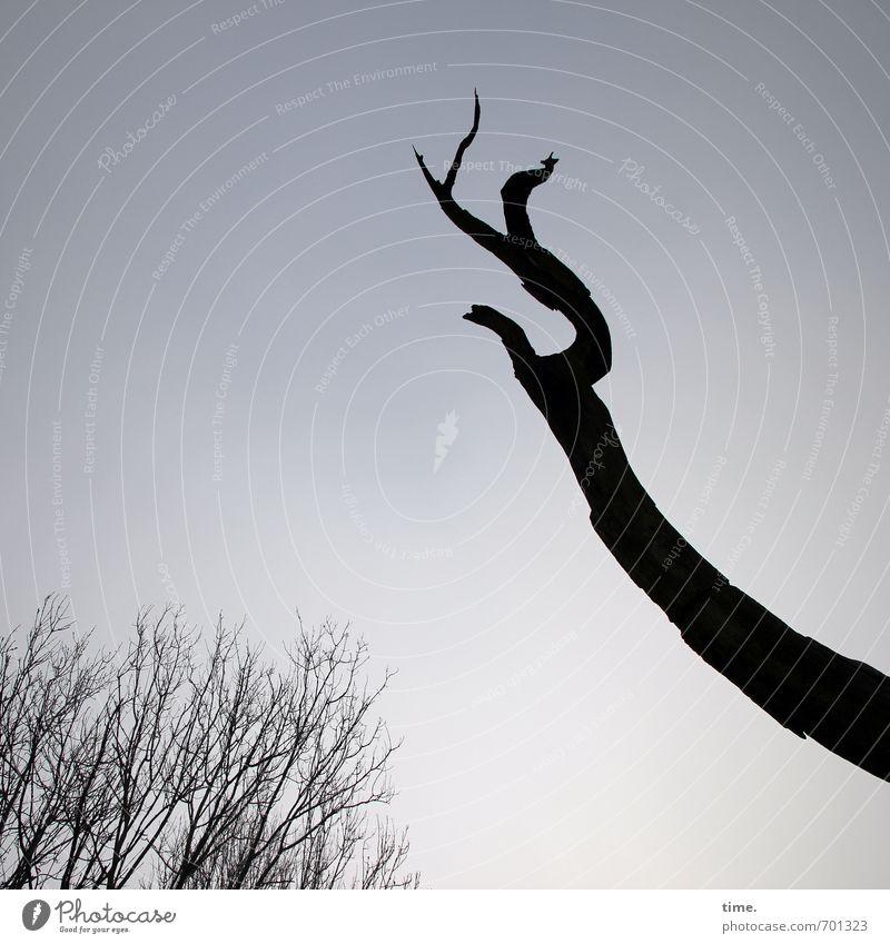 Ahnenkult Himmel Schönes Wetter Baum Ast Totholz Wald alt Sympathie authentisch Weisheit demütig Partnerschaft Erfahrung Zufriedenheit einzigartig Inspiration