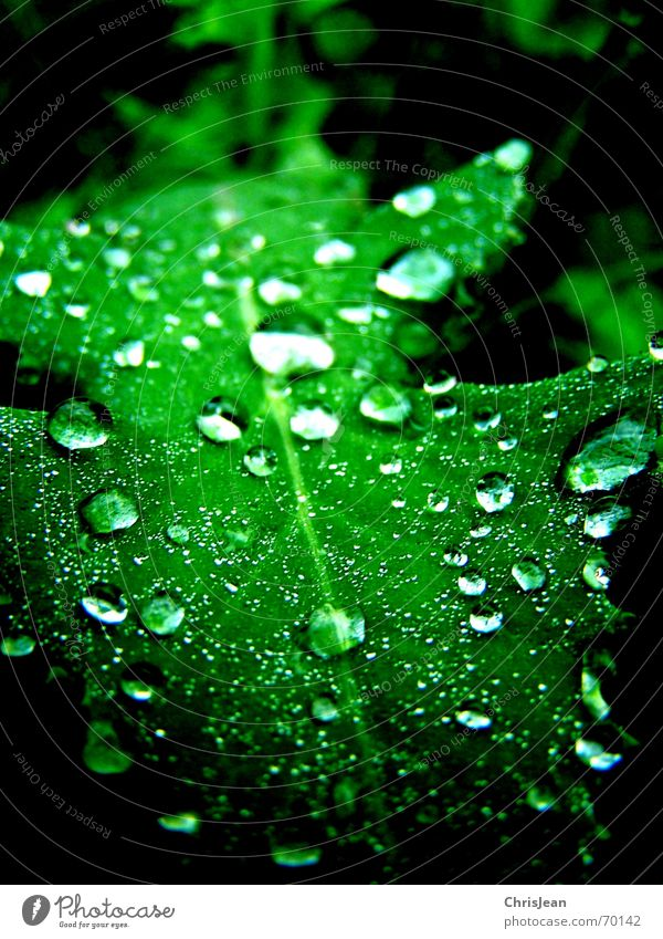 Titellos Natur schön grün Wasser Blatt ruhig frisch Wassertropfen nass Tau Anschnitt feucht Bildausschnitt Blattgrün hydrophob