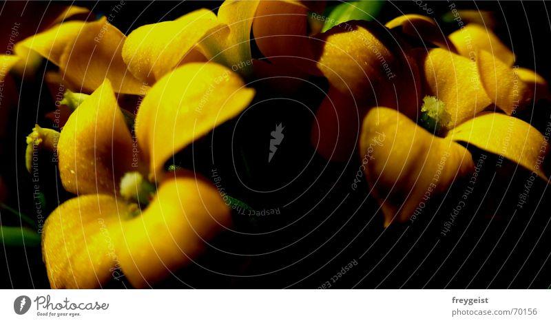 Yellow / Black Blume schwarz gelb Lampe