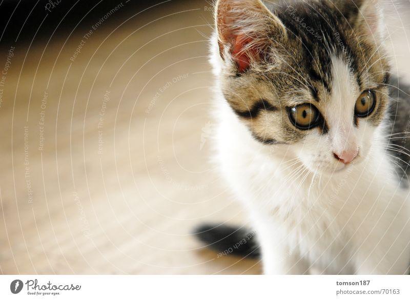 pussycat Auge Katze Aussicht Momentaufnahme