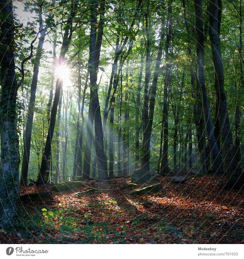 Verborgen unterm Laub (2) Umwelt Natur Landschaft Pflanze Himmel Sonne Sonnenlicht Herbst Schönes Wetter Baum Gras Sträucher Moos Grünpflanze Wildpflanze Wald