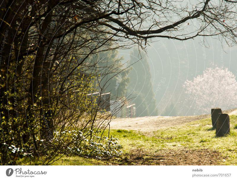 frühlingslicht Natur grün Sommer Sonne Landschaft Wald gelb Wärme Frühling Holz Stein Stimmung Horizont Nebel Idylle Sträucher