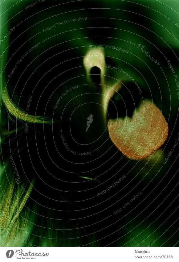 Scary Gesicht Frau Erwachsene Nase Theater dunkel Ekel gruselig grün Angst Scanner Glasscheibe außerirdisch Glätte feucht Paddel Panik obskur Zunge abschlecken
