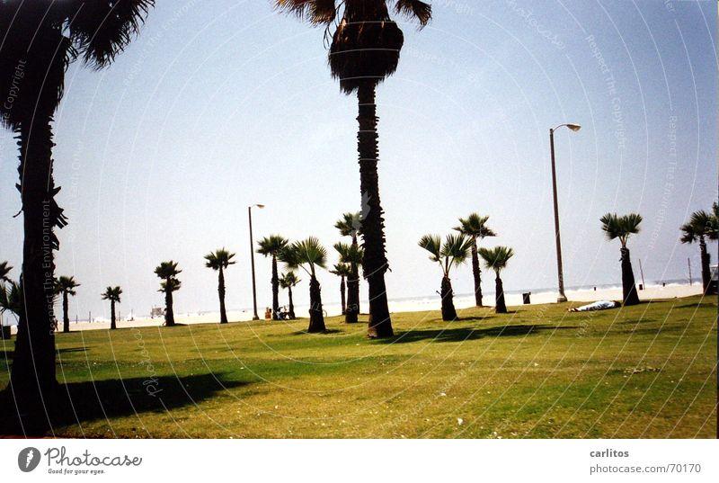 da will ich jetzt auch hin Strand Ferien & Urlaub & Reisen träumen Küste USA Freizeit & Hobby Palme Kalifornien Los Angeles Malibu