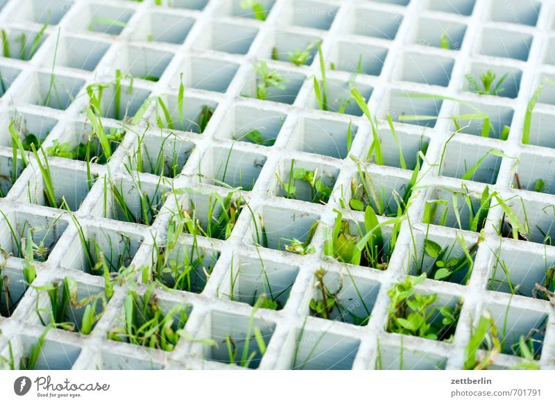 Frühling Umwelt Natur Erde Klima Schönes Wetter Pflanze Blatt Grünpflanze Garten Park Wiese Stadt Stadtzentrum Wachstum Lebensfreude Frühlingsgefühle Platzangst