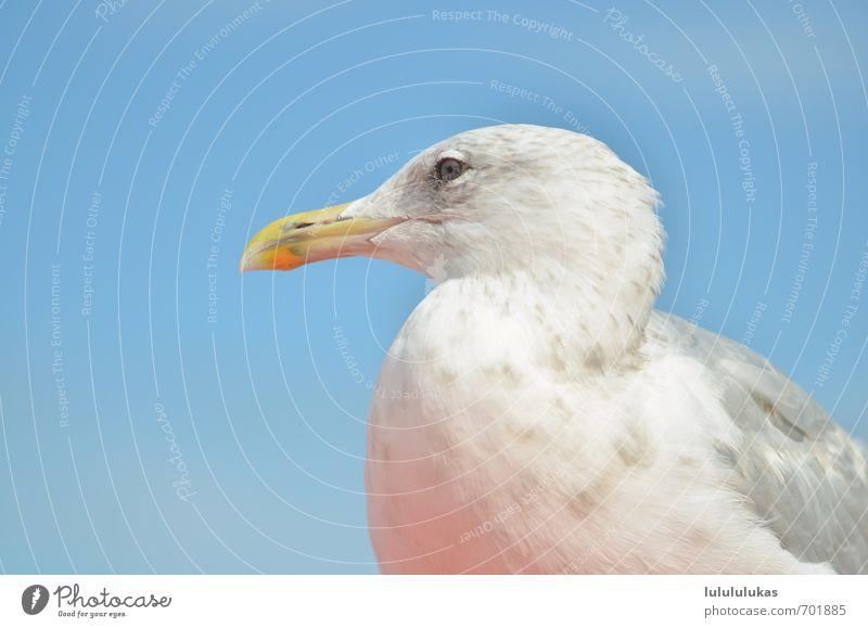 das ist eine moewe. Himmel Natur Ferien & Urlaub & Reisen Meer Auge Kopf Vogel beobachten Möwe Schnabel himmelblau Möwenvögel Vogelkopf
