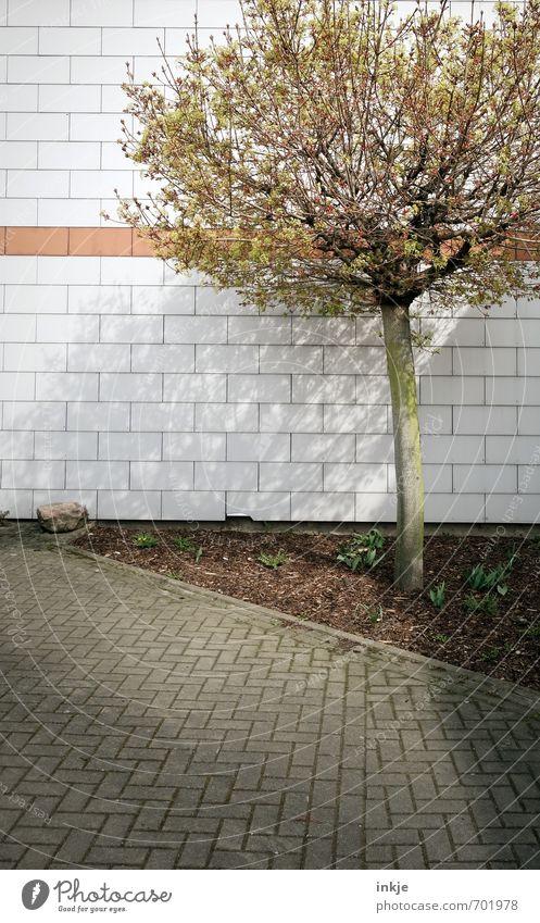 urban gardening Stadt Baum Haus Umwelt Wand Frühling Mauer Stein Garten Fassade Häusliches Leben trist Wachstum Platz Schönes Wetter Ecke