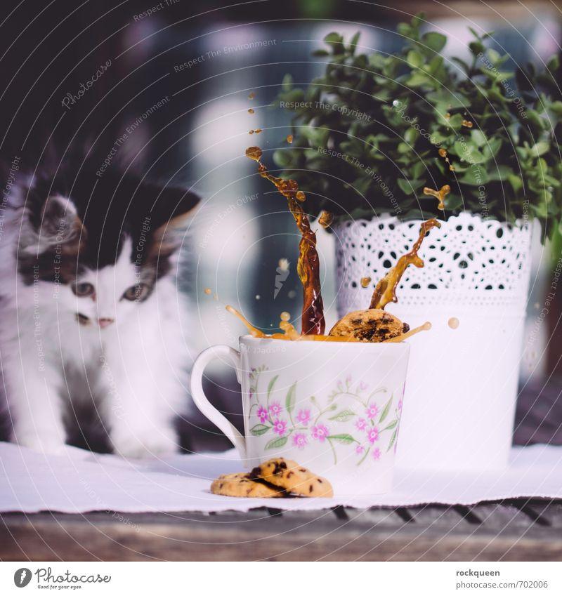War ich nicht! Teigwaren Backwaren Frühstück Kaffeetrinken Getränk Tasse Becher Frühling Sommer Pflanze Sträucher Grünpflanze Garten Tier Haustier Katze Fell