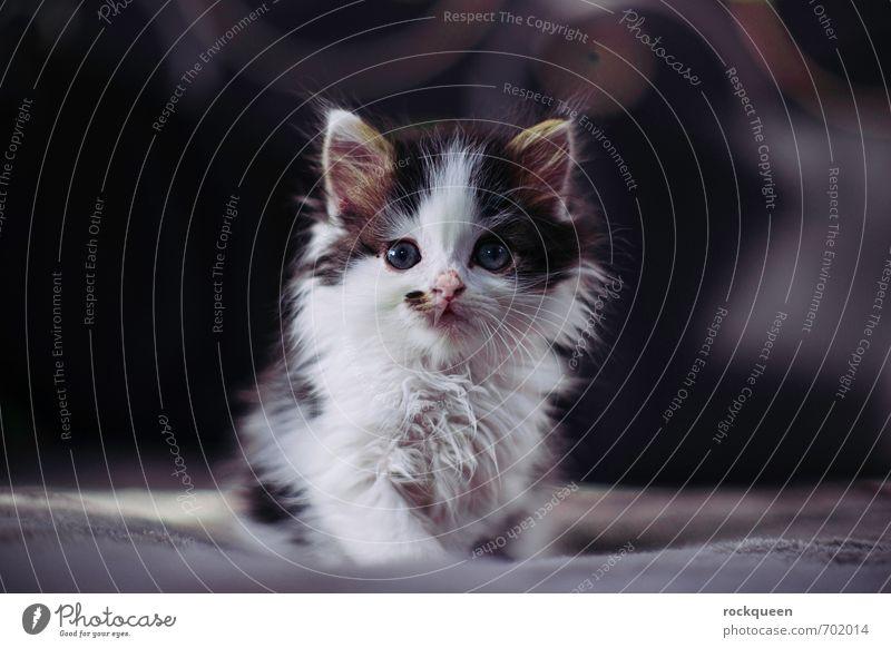 Was starrst du so? Zufriedenheit Tier Haustier Katze 1 Tierjunges Blick sitzen träumen ästhetisch frech niedlich Farbfoto Gedeckte Farben Innenaufnahme