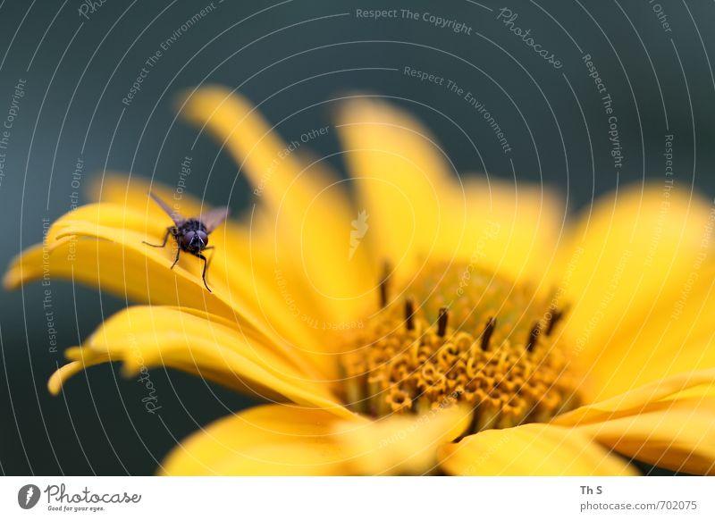 Fliege Natur schön Pflanze Sommer Tier Frühling Blüte Freiheit natürlich elegant ästhetisch Blühend Lebensfreude Duft harmonisch