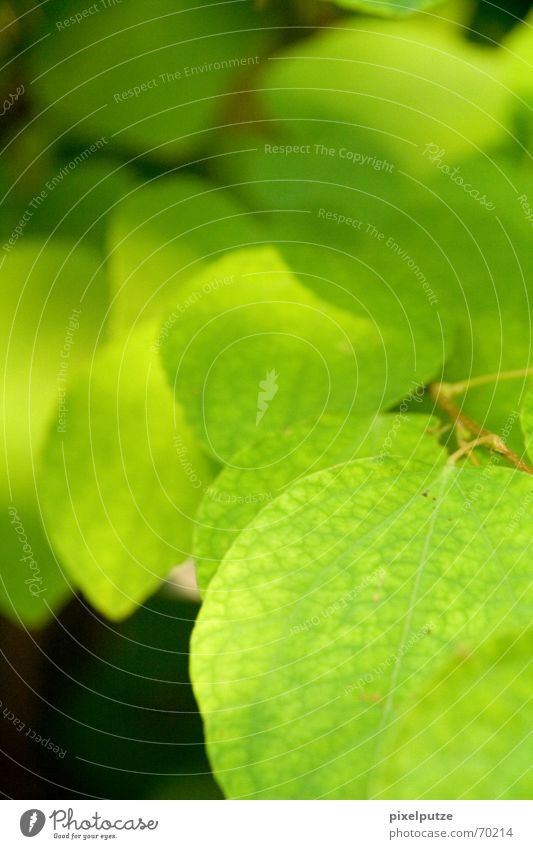 Blattsalat Natur Baum grün Pflanze Ast Botanik