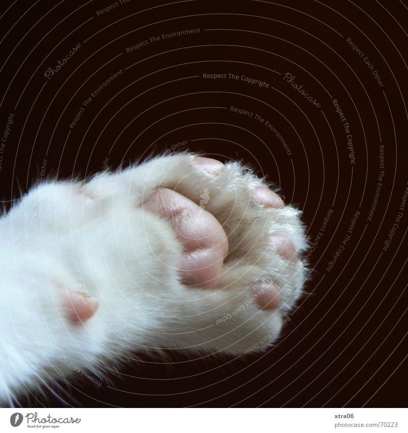 Wolfgang Pfote Katzenpfote Frieden Fell süß Krallen Tier Haustier niedlich schwarz weich Hauskatze Lebewesen Makroaufnahme Nahaufnahme Säugetier