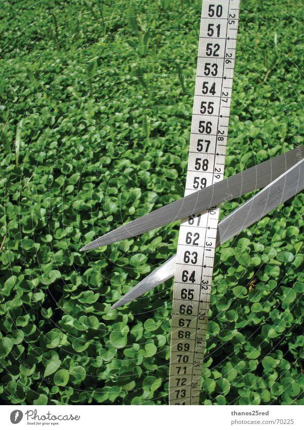 STOP measure us.... stoppen Schlag Schliff measuring grass lucky unlucky end