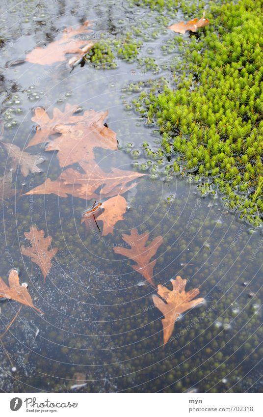 Mooswelt Umwelt Natur Landschaft Pflanze Wasser Herbst Winter schlechtes Wetter Wiese Wald Moor Sumpf Tod Traurigkeit Umweltschutz Vergänglichkeit Wachstum