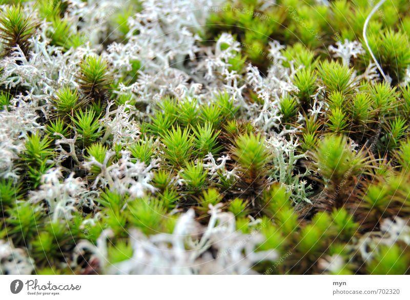 Moos Natur Pflanze Einsamkeit ruhig Winter Wald Umwelt Traurigkeit Wiese Herbst Wachstum ästhetisch Wandel & Veränderung Vergänglichkeit feucht