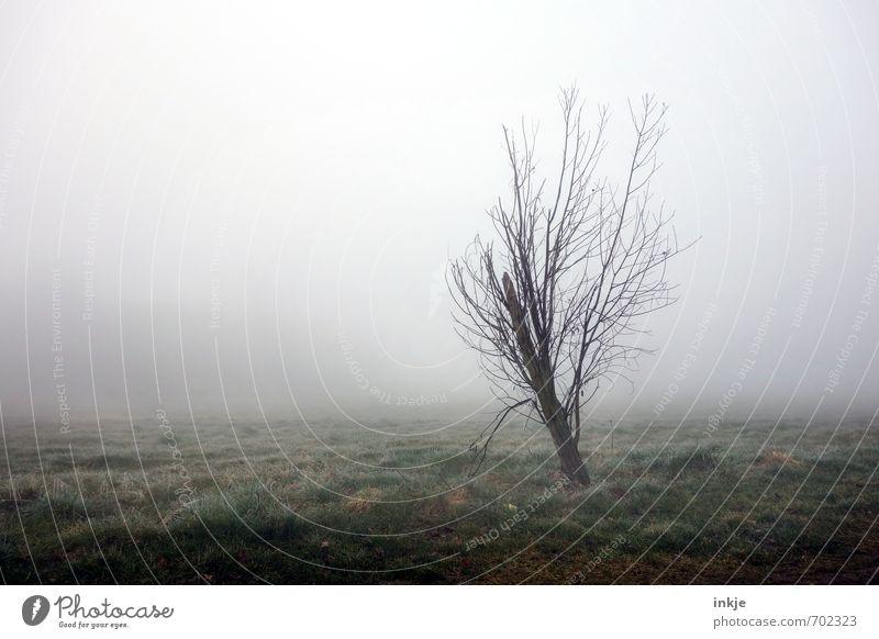 Hässlicher Zwerg (aber heute ein Topmodel!) Natur Baum Einsamkeit Landschaft dunkel kalt Umwelt Wiese Herbst Frühling Gras Stimmung Luft Park Wetter Feld