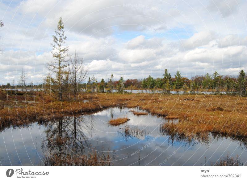 Moor Umwelt Natur Landschaft Pflanze Urelemente Erde Wasser Himmel Wolken Herbst Winter schlechtes Wetter Regen Baum Sträucher Moos Sumpf Teich See