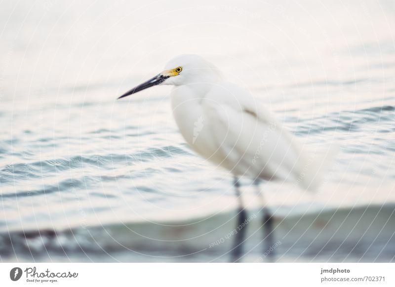 Tilt Shift Bird Natur weiß Wasser Sommer Meer Tier Strand Küste Denken Sand fliegen Vogel Wildtier beobachten Flügel entdecken