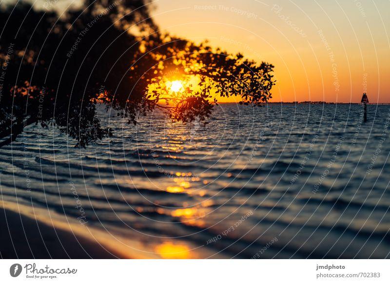 Sonnenuntergang in Florida Himmel Ferien & Urlaub & Reisen Wasser Sommer Meer Erholung Ferne Strand gelb Küste Freiheit Horizont Luft Wellen gold