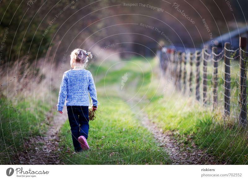 zeit. zum träumen Mensch feminin Kind Mädchen Kindheit Leben 1 3-8 Jahre Umwelt Natur Frühling Herbst Schönes Wetter Wiese Wald entdecken Erholung gehen Blick