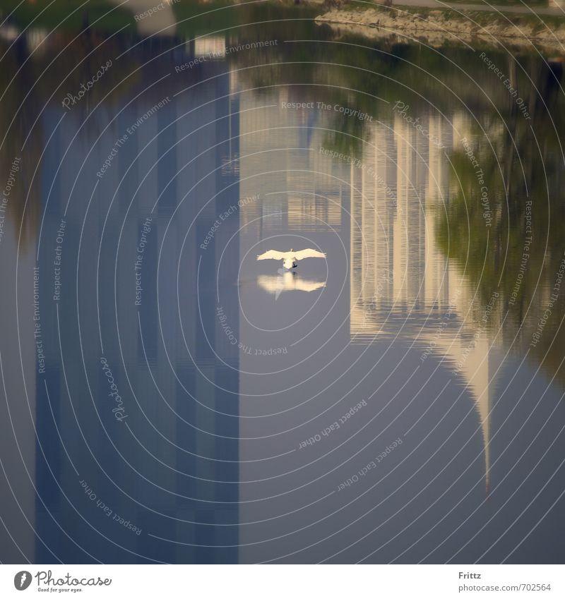 Schwanenstadt Natur Tier Wasser Fluss Neue Donau Hochhaus Wildtier Vogel Flügel 1 fliegen blau grün weiß Landen weißer Vogel Reflexion & Spiegelung Wasservogel