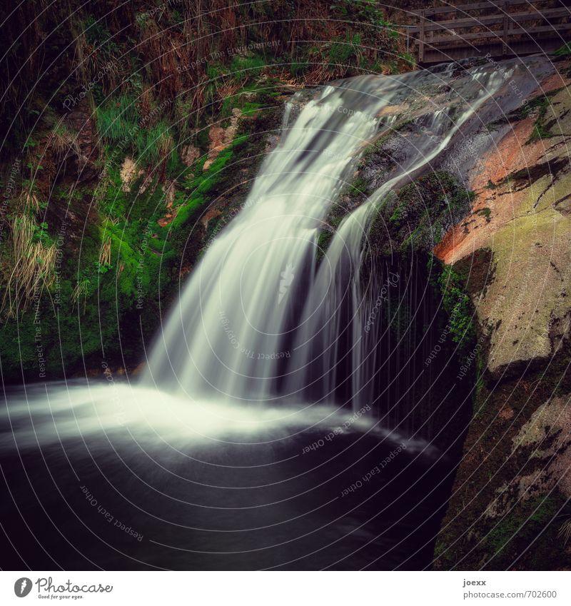 Über sieben Stufen Natur schön grün weiß Wasser Pflanze ruhig schwarz braun Idylle weich Gelassenheit Quadrat Bach Schlucht