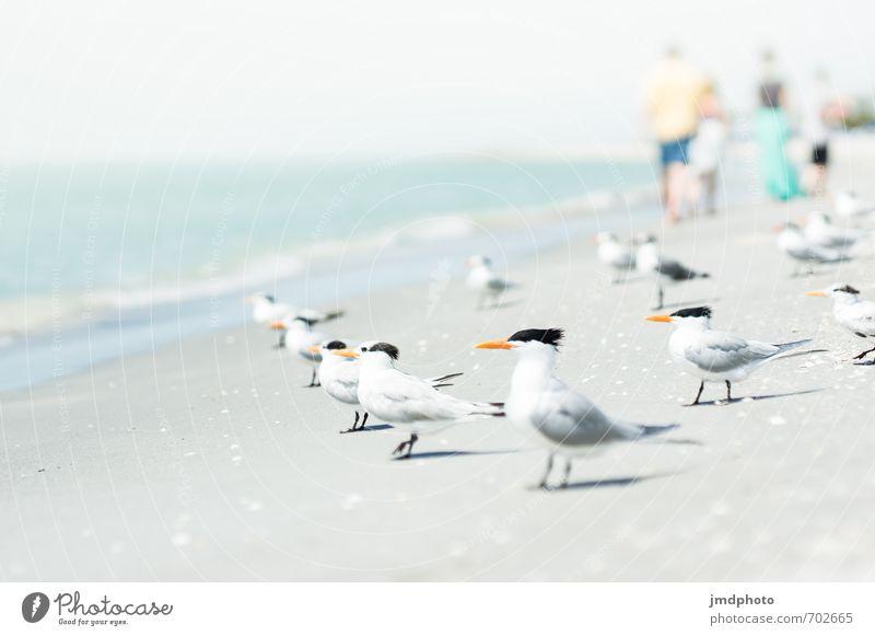 Warten auf die perfekte Welle Mensch Natur Ferien & Urlaub & Reisen Sommer Sonne Meer Tier Ferne Strand Küste Freiheit Vogel Horizont Tourismus Wellen Flügel