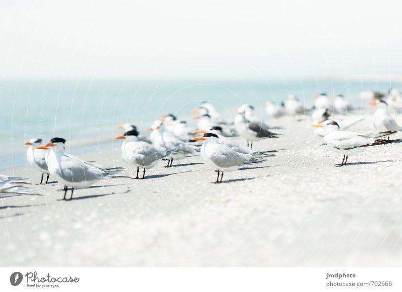 Warten immer noch Umwelt Natur Tier Sand Luft Wasser Himmel Horizont Sonne Sommer Schönes Wetter Küste Strand Bucht Meer Insel Vogel Flügel Möwe Schwalben