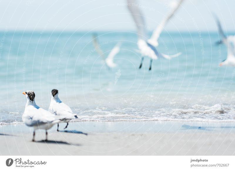Warten nicht mehr Natur Tier Sand Luft Wasser Sommer Schönes Wetter Küste Strand Wildtier Vogel Flügel Möwe Möwenvögel Schwalben Tiergruppe Schwarm hell Angst