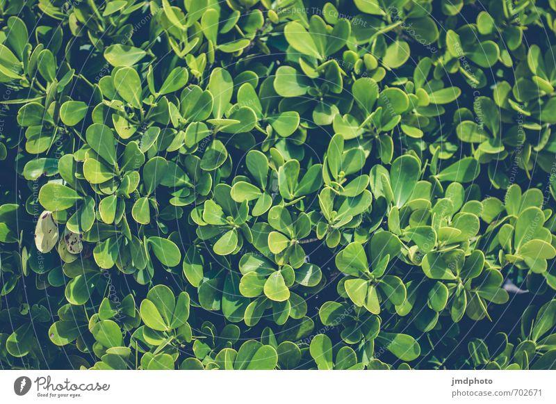 Hecke Natur Ferien & Urlaub & Reisen alt grün Pflanze Blatt dunkel Umwelt Frühling Park Sträucher wandern ästhetisch frisch beobachten gruselig