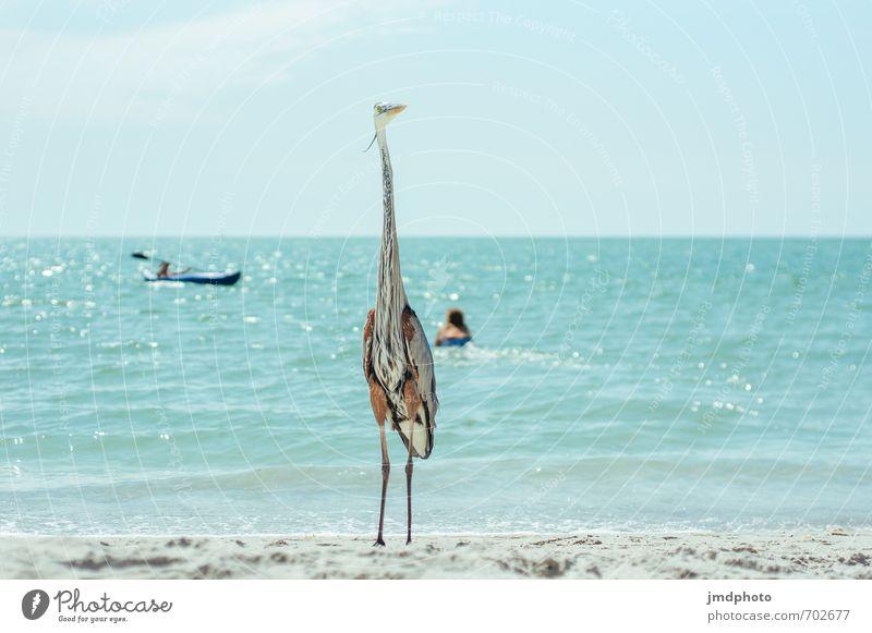 The Great Blue Heron Mensch Natur Ferien & Urlaub & Reisen Wasser Sommer Meer Erholung Tier Ferne Strand Umwelt Küste Freiheit Sand Horizont Luft