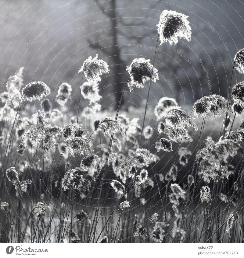 Am Weiher Sonne Umwelt Natur Landschaft Pflanze Wasser Sonnenlicht Sommer Herbst Blatt Grünpflanze Wildpflanze Seeufer Moor Sumpf Teich natürlich weich braun