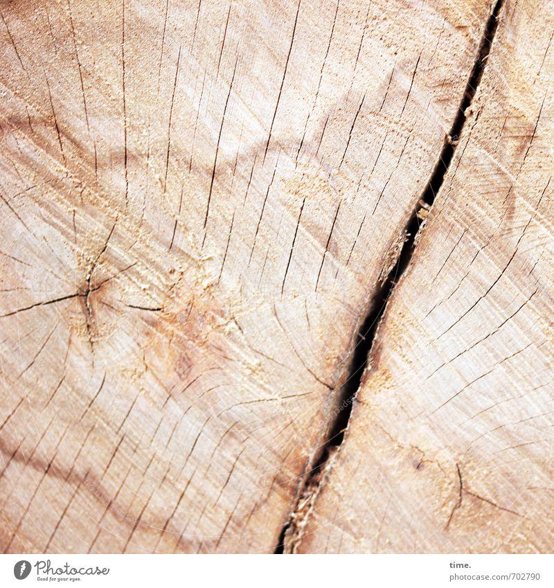 cut Umwelt Natur Baum Baumstamm Baumsterben Fällholz Maserung Furche Riss Jahresringe Buche alt authentisch fest natürlich Schmerz Senior Stress elegant