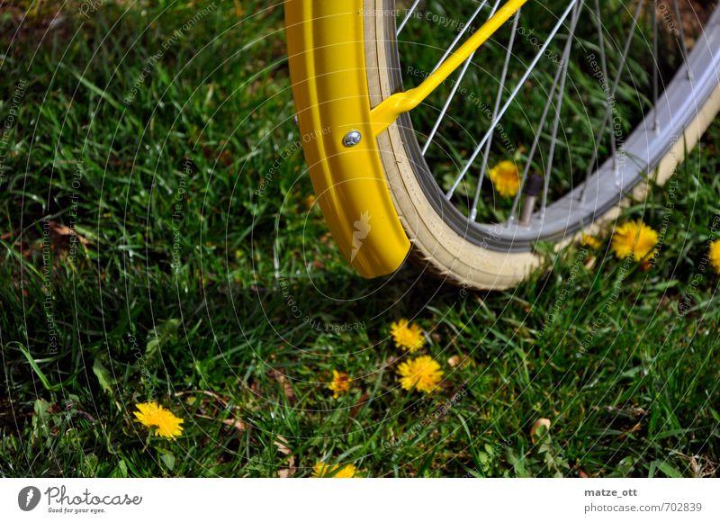 Gelb und Grün Natur Ferien & Urlaub & Reisen grün Sommer Blume gelb Umwelt Wiese Bewegung Sport Gras natürlich Freizeit & Hobby Fahrrad Ausflug Fitness