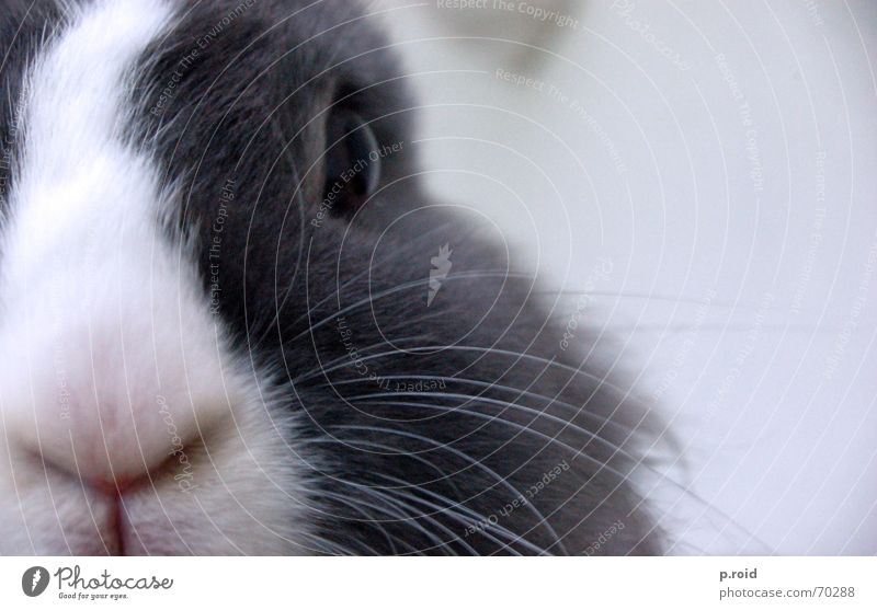 keine halben sachen. Tier Nase süß Baustelle Ohr niedlich Fell Konzepte & Themen Hase & Kaninchen Säugetier fein Möhre Höhle herzlich Kaninchenbau