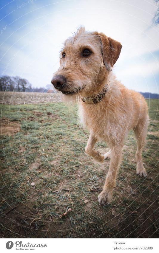 Unperspektivischer Hund grün Freude Tier Wiese Spielen Feld Schönes Wetter Sicherheit Neugier Vertrauen Gelassenheit Tiergesicht Wachsamkeit Geruch Haustier
