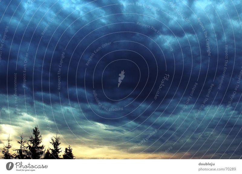 august 2006 Himmel Baum Sonne Wolken dunkel Wind Wetter Tanne Gewitter August Lichtblick Wolkendecke